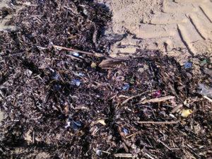 basura marina en las playas LEMA