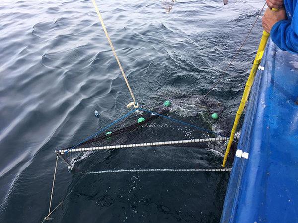 Día de pesca en el proyecto LIFE LEMA. Recogimos 5 kilos de basura marina.